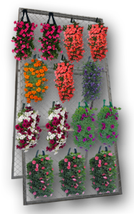 Merchandising-plants-in-rack
