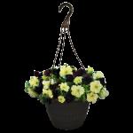 Designer Petunia Basket