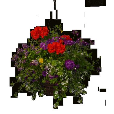 Natures Premium Basket