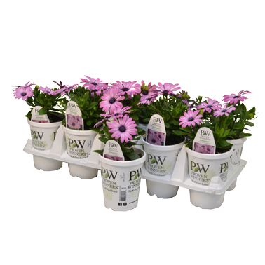 Vegetative Annuals