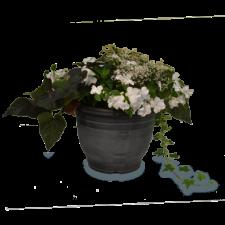 Combo Planter