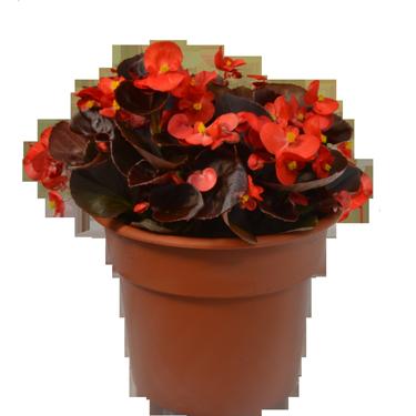 """10"""" Annual Pot"""
