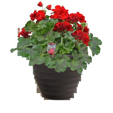 Calliope Planter
