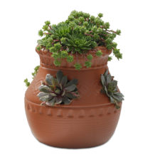 Hens and Chicks Jar