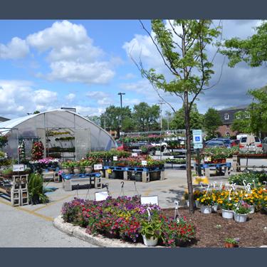 Greenhouse Parking Lot