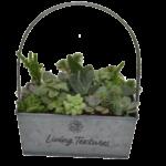 Living Texture  Succulent Tin