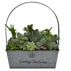 Living Texture Succulents Luurtsema Garden Center Solution