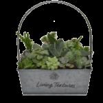 Succulent Tin