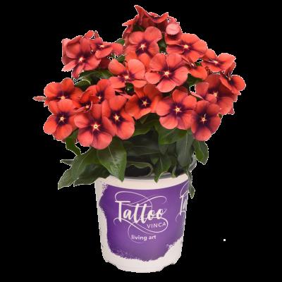 #1 Pot Annuals