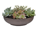 "NEW 11"" Living Texture Succulent Planter"